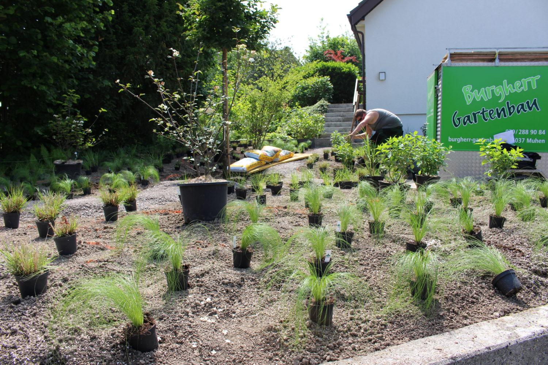 vorgarten umgestaltung eines efh in aarau - burgherr gartenbau